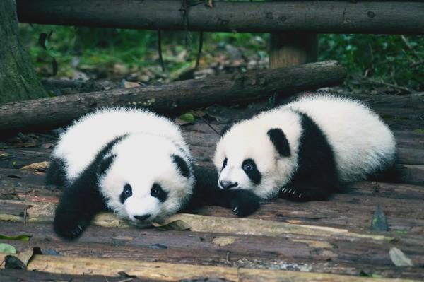 panda-gifts